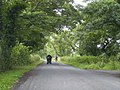 Two modes of transport on a Lancashire Lane - geograph.org.uk - 1397119.jpg