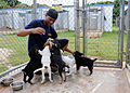 US Navy 110618-N-UE250-057 Boatswain's Mate 3rd Justin Bey plays with a kennel of puppies at the Guam Animals In Need (GAIN) animal shelter.jpg