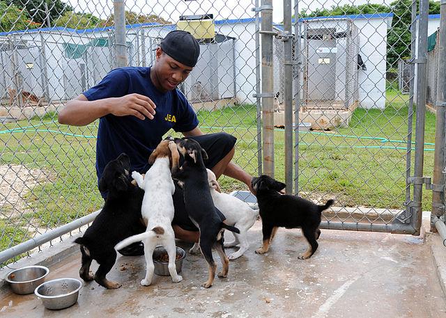 Dogs Trust Volunteer Day Warwick Volunteers