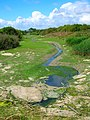 Unnamed Stream, Pagham Harbour - geograph.org.uk - 501582.jpg