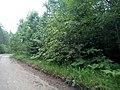 Valdaysky District, Novgorod Oblast, Russia - panoramio (446).jpg