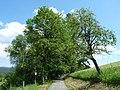 Vatětice, památné stromy.jpg