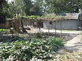 Vegetable field in a village in Bangladesh 3.JPG