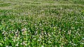 Vegetation in Ararat village of Ararat province.jpg