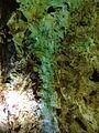 Vein of turquoise in Ungurli-kan.jpg