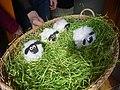 Veselé Velikonoce (vajíčka ovečky).jpg