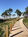 Viana do Castelo (31288504474).jpg