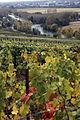Vigne Pinot noir (Vue sur la Marne) Cl.J.Weber05 JPG (23569145082).jpg