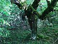 Vikos Gorge Forest Kapesovo Route03.jpg