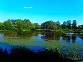 Vilas Park Lagoon - panoramio.jpg