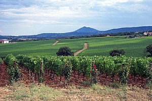 Val d'Orcia - Sangiovese vineyards in the Val D'Orcia, Monte Amiata in the background.