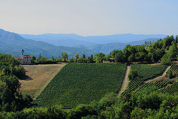 Vineyards in the Italian wine region of Brache...