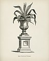 Vintage illustrations by Benjamin Fawcett for Shirley Hibberd digitally enhanced by rawpixel 99.jpg