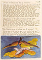 Visions of the Daughters of Albion copy G plate 06.jpg
