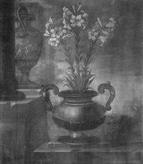 Vita liljor i en kruka