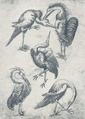Vogel-Fünf.png