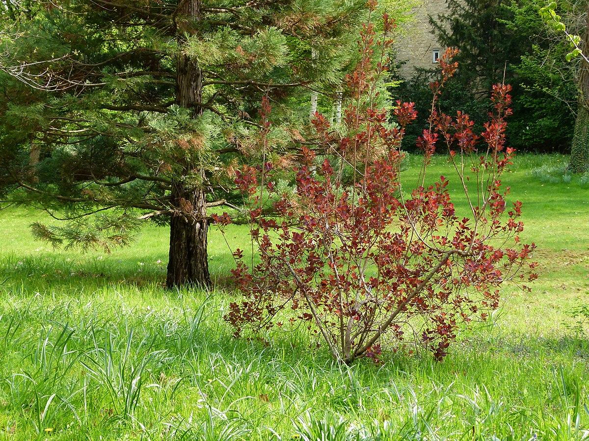 Les Jardins À L Anglaise file:vue sur le jardin à l'anglaise albert kahn