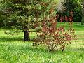 Vue sur le jardin à l'anglaise Albert Kahn.JPG