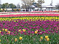 Wada-park,inashiki-city,japan.JPG