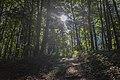 Wald an der Steinernen Rinne 149.jpg