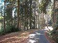 Wandern im November in Todtmoos - panoramio (8).jpg
