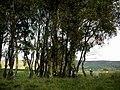Watchful sheep - geograph.org.uk - 577347.jpg