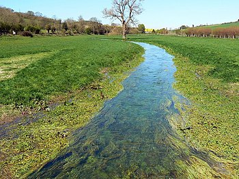 English: Watercourse between Preston and Whittonditch, Wiltshire (1) The stream doesn't appear to have a name. It discharges into the River Kennet just west of Chilton Foliat. The water is very clear with a healthy growth of aquatic plants.