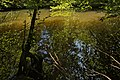 Weiher, Landschaftsschutzgebiet Nagoldtal, Kennung 2.35.037, 05.jpg