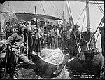 Whaling, Splitting the Case (4903867806).jpg
