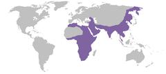 Wiki-Panthera pardus.png