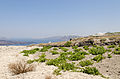 Winegrowing between crater rim and Megalochori - Santorini - Greece.jpg
