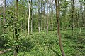 Woodland on the edge of Burley Park - geograph.org.uk - 414162.jpg