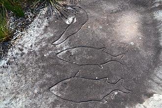 Sydney rock engravings - Whale carvings in Bondi.