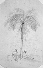 [Two men sitting under a tree fern]