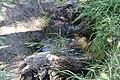 «Արփի լիճ» ազգային պարկ-13.jpg