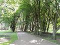 Łask, Park Miejski-003.JPG