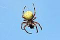 Αράχνη - panoramio.jpg