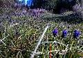 Σταφυλλάκι δίπλα στο Ρέμα του Κοκκιναρά - panoramio.jpg