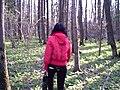 Ботанический сад Поволжского государственного технологического университета.jpg