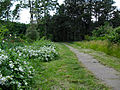 Ботанічний сад ДНУ 02.JPG