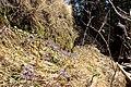Весна, она и в монастыре (3775463013).jpg