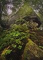 Вижницький НПП Скелі в лісі.jpg