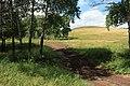 В рощице - panoramio.jpg