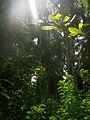Гоа (лес).JPG