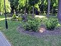 Гомель. Парк. Клумбы. Фото 02.jpg