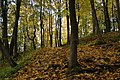 Гора Парнас в Александровском парке.JPG