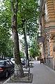 Група вікових дерев береки, Печерський район вул. Банкова,2 01.jpg