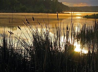 Захід сонця над Святошинським озером.jpg