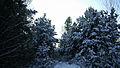 Зима 2009.jpg