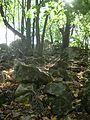 Лес около Ширяево - panoramio.jpg